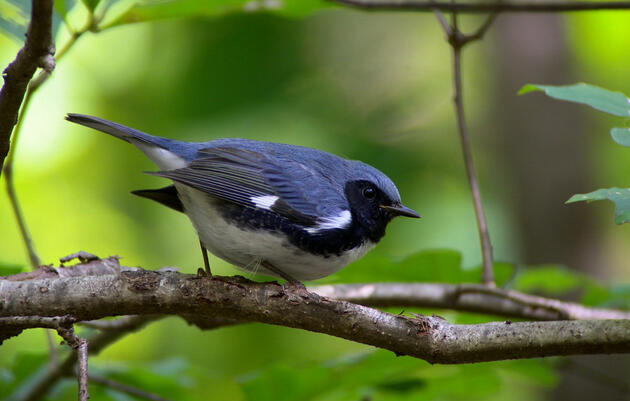 Birds of the Delaware River Watershed