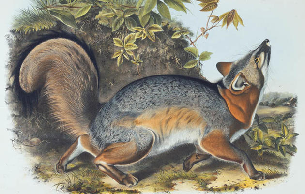 "What is ""The Viviparous Quadrupeds Of North America"""