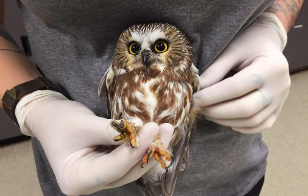 How Audubon Helps Raptors Through Rehab