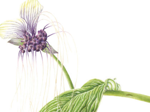 Botanical Illustrations - Changing Gallery